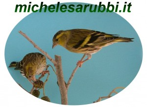 www.michelesarubbi.it